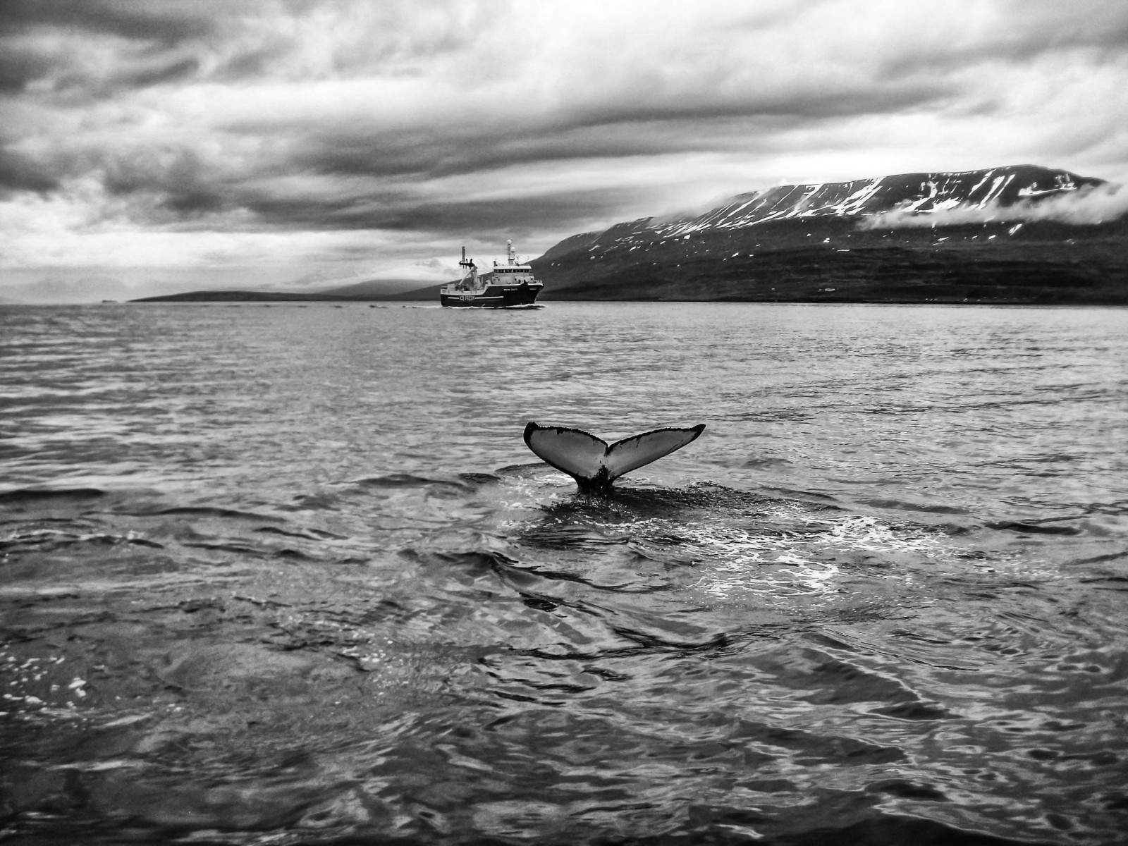 Island-11.jpg.